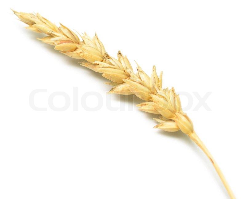 Hd Wallpaper Texture Fall Harvest Wheat Spike Stock Photo Colourbox