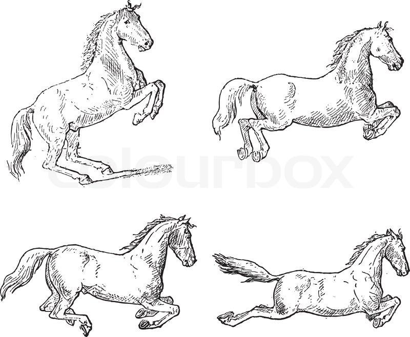 Classical Horse Dressage Movements, vintage engraving