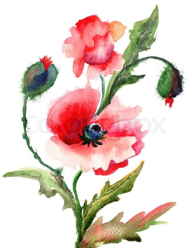 Beautiful Poppy flowers Watercolor painting  Stock Photo