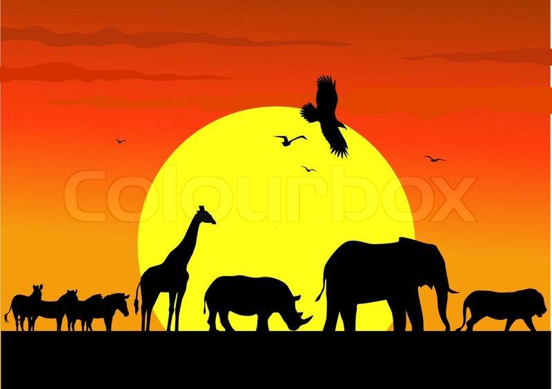 wild animal background stock