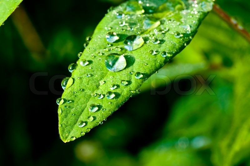 Early Fall Hd Wallpaper Raindrops On Leaf Stock Photo Colourbox