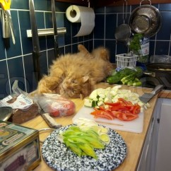 Cats In The Kitchen Apple Valley Cabinets Cat While Cooking Stock Photo Colourbox