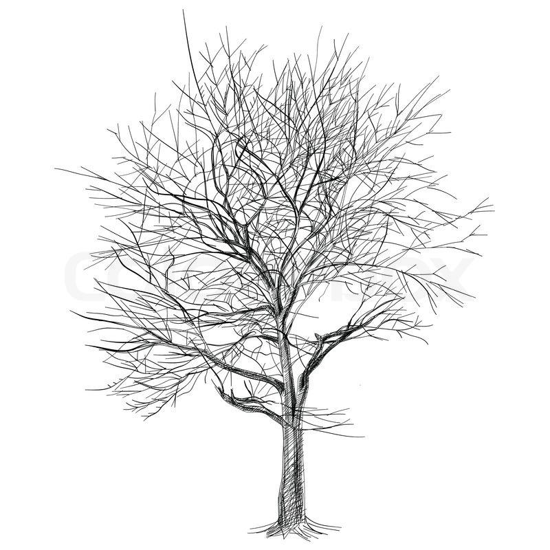 Großen kahlen Baum ohne Blätter Sakura Baum