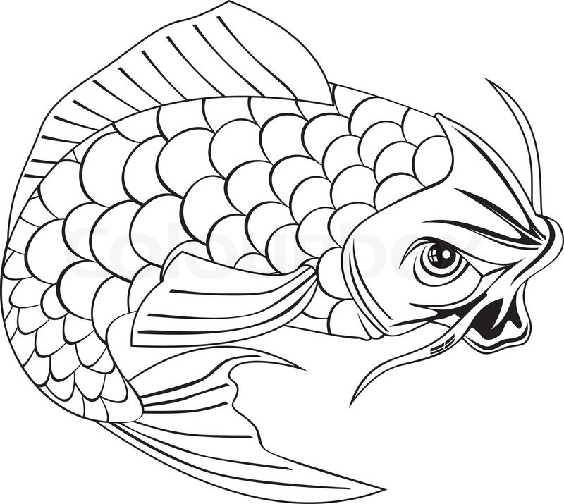 Illustration Koi Fish Drawing Vector Vector Stock Vector