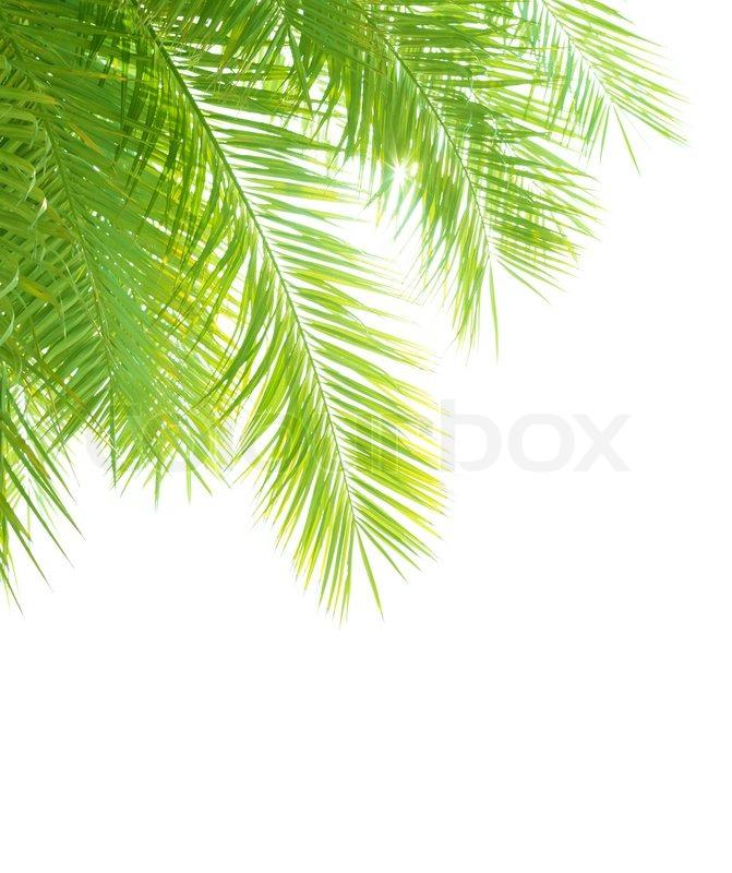 Closeup on beautiful fresh green palm   Stock Photo