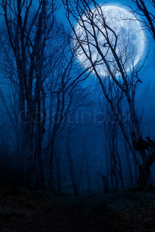 Spooky Fall Wallpaper Dark Night Forest Agaist Full Moon Stock Photo Colourbox