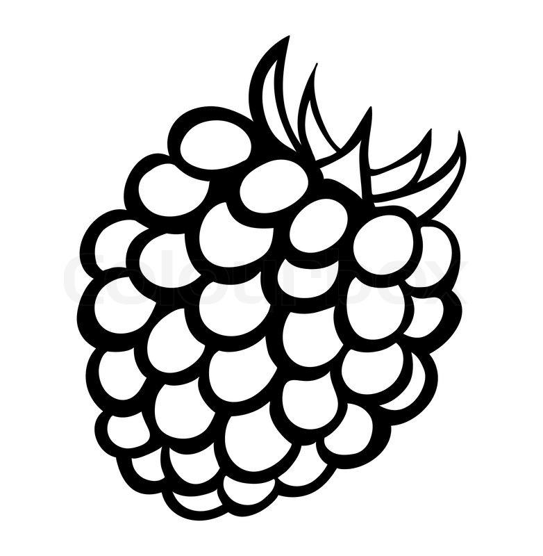 Vector monochrome illustration of raspberry logo. Many