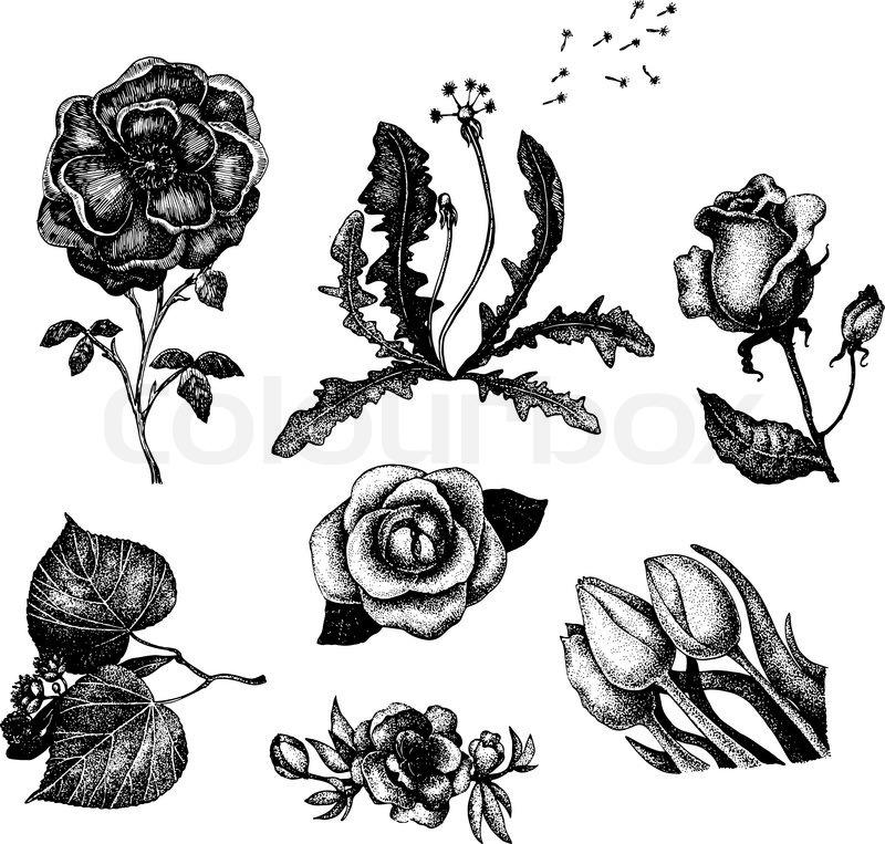 Blumen Gezeichnet Bilder