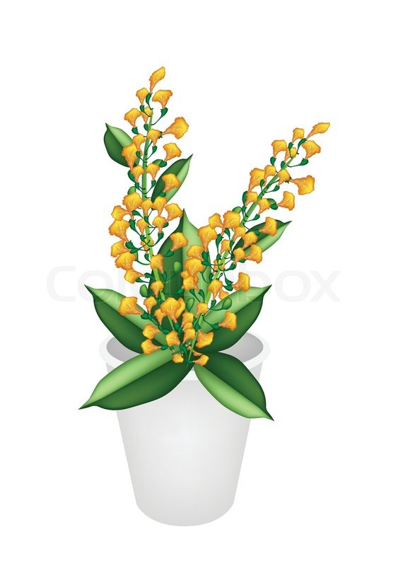 Beautiful Yellow Padauk Flower in A Flower Pot  Stock Vector  Colourbox