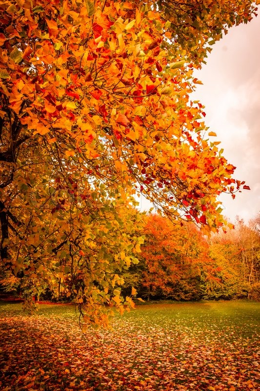Free Fall Colors Wallpaper Autumn Landscape In Beautiful Colors Stock Photo Colourbox
