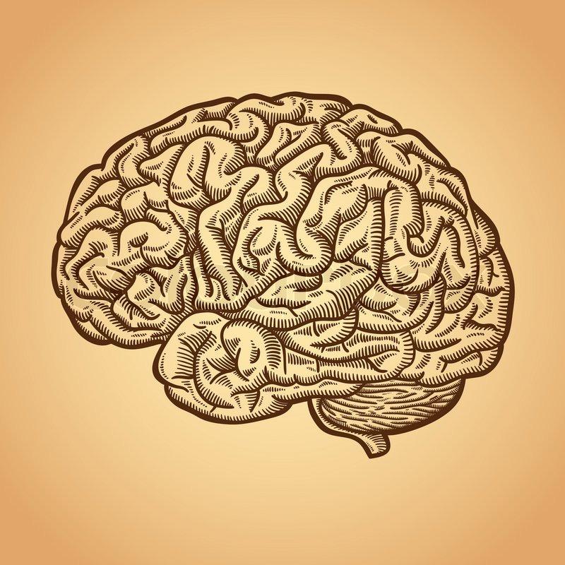 internal brain diagram car alarm system wiring diagrams human   stock vector colourbox