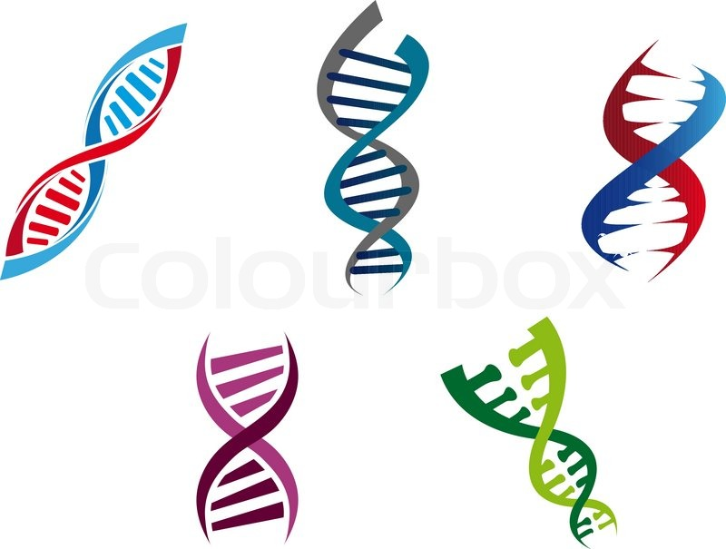 Dna Gene Chromosome Genome
