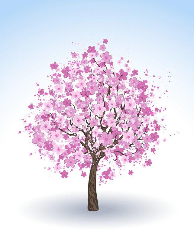 Blhenden Kirschbume Baum  Vektorgrafik  Colourbox