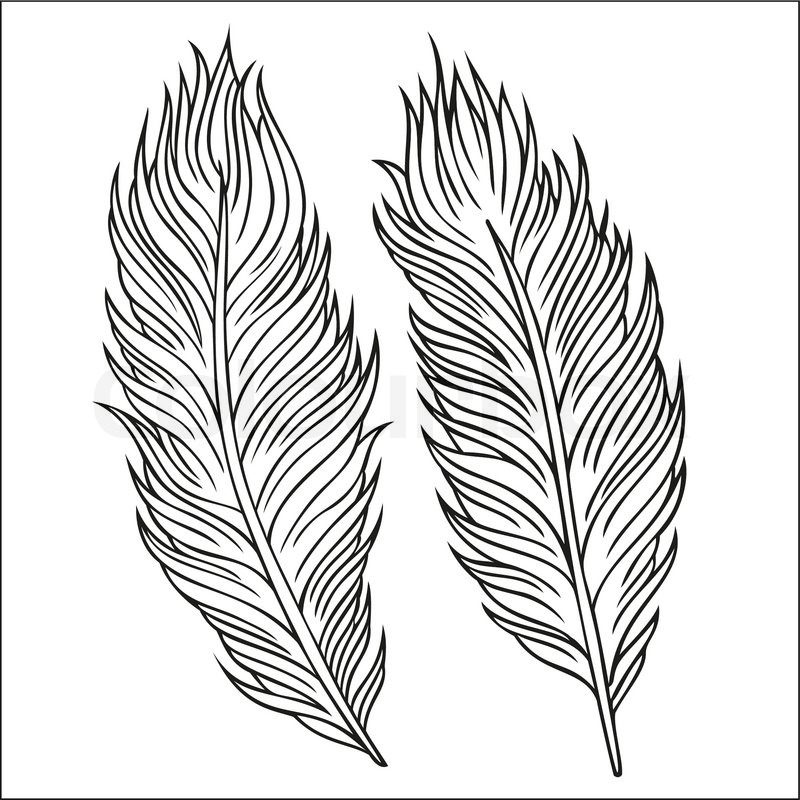 Vintage abstract decorative ethnic vector Feathers. Hand