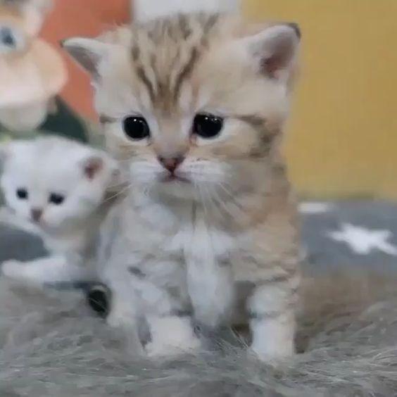 【幼貓照顧】小貓拉肚子怎麼辦?了解腹瀉的 3 大原因與預防方法! | CatCity 貓奴日常