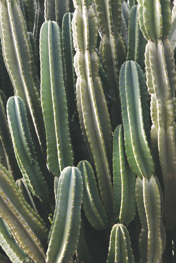 Southwest Cactus by Catherine McDonald  Artfully Walls