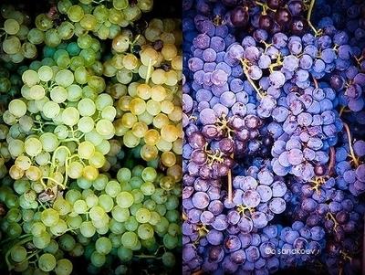Associate Degree Wine Essentials, Viticulture & Wine Production