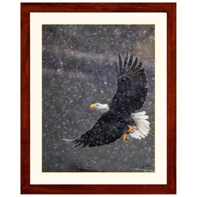 Eagle in Snow with Fish -- Jeff Lane