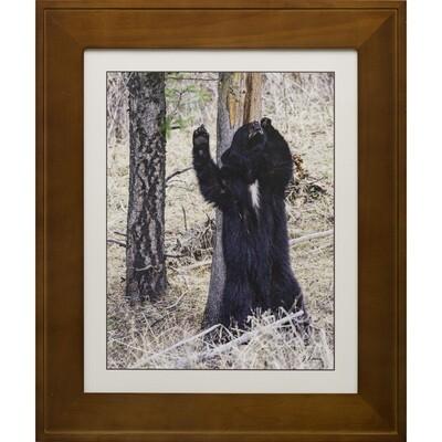 Black Bear Scratching -- Jeff Lane