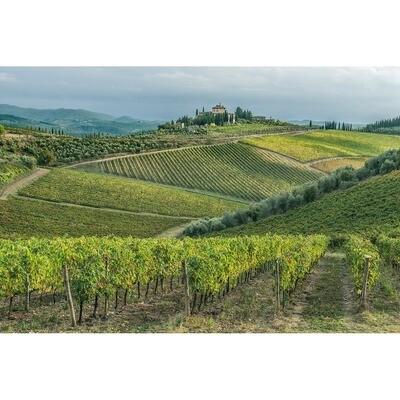 Chianti Vineyard -- Rob Tilley