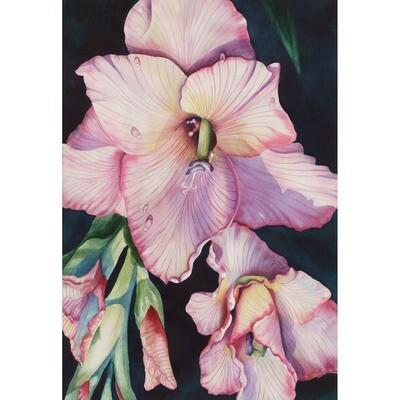 Gladiola -- Sandi McGuire