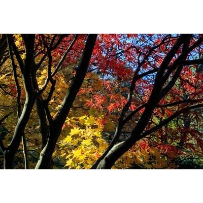 Kubota Garden Fall Colors -- Phyllis McDaniel