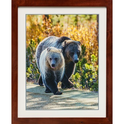 Rose and Snow Silvertip Grizzly Mom and Cubs -- Jeff Lane