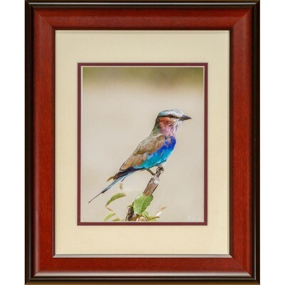 Lilac Breasted Roller -- Jeff Lane