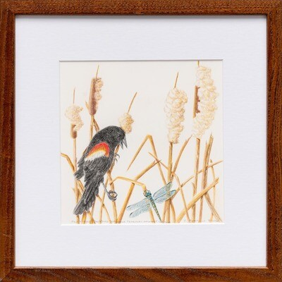 Red Winged Blackbird Defending Its Territory -- Sylvia Portillo