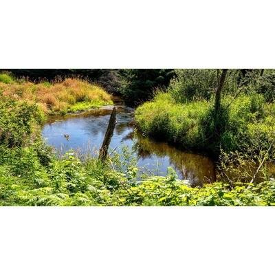 Bear Creek Bend -- Larey and Phyllis McDaniel