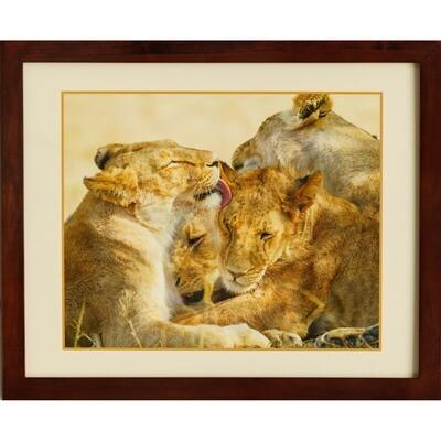 Lionesses Cuddling -- Jeff Lane