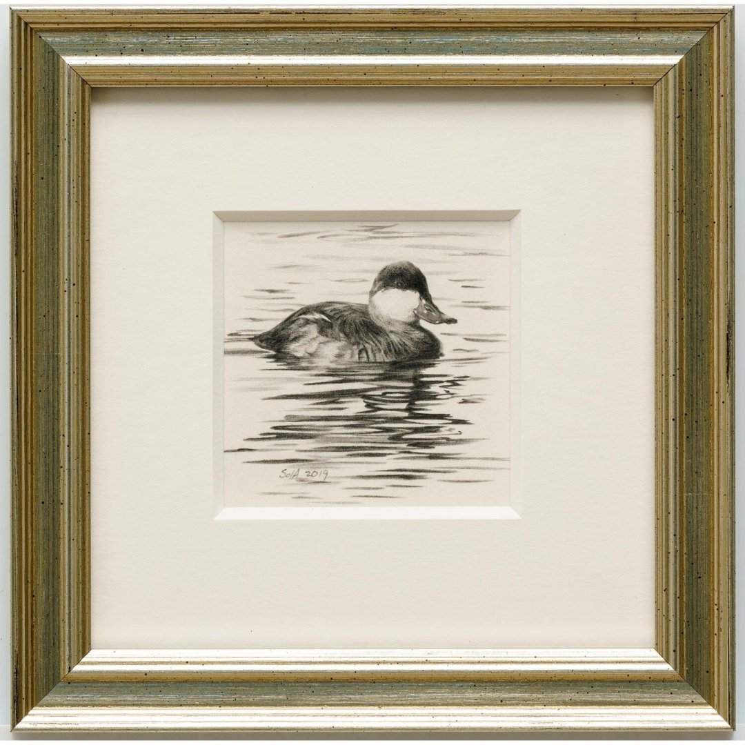 Adair, Sue deLearie -- Ruddy Duck