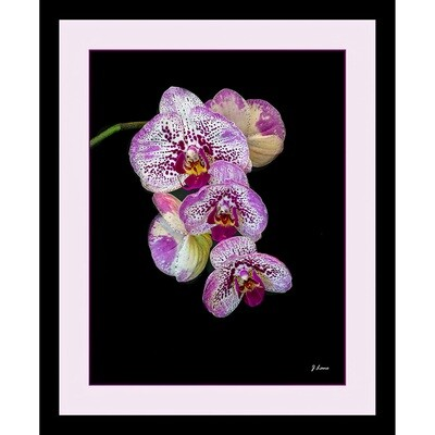 Purple and White Speckled Orchid -- Jeff Lane