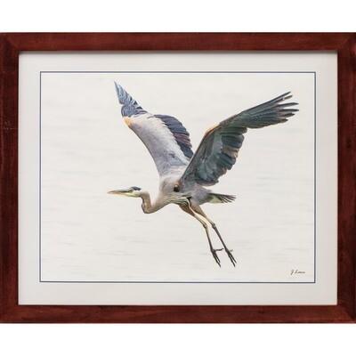 Great Blue Heron in Flight -- Jeff Lane