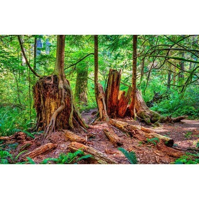 Resident Stumps -- Larey McDaniel