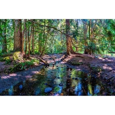 Mackey Creek Panorama -- Larey McDaniel