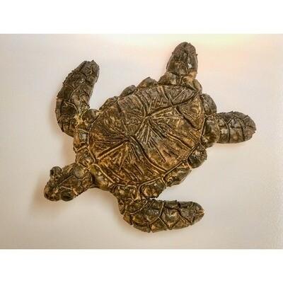 Sea Turtle -- Rachel Muller