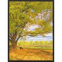 A Great Tree, A Great Soul -- Lisa Marie Kostal