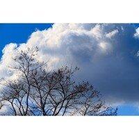 Bear Creek Cloudscape -- Phyllis McDaniel