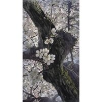 Cherry Blossom Shadows -- Catherine M. James