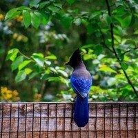Feelin Blue -- Phyllis McDaniel
