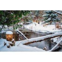 Let it Snow -- Larey McDaniel