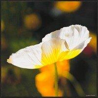 Morning Light II -- Lisa Marie Kostal
