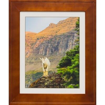 Mountain Goat Enviroscape at Logan Pass -- Jeff Lane