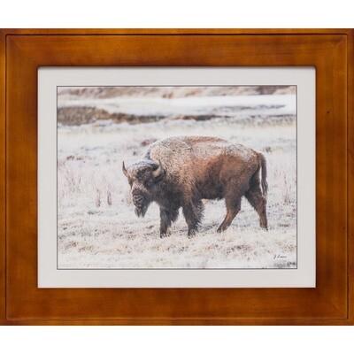 Frosty Yellowstone Bison -- Jeff Lane