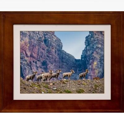 Bighorn Sheep Enviroscape at Logan Pass -- Jeff Lane