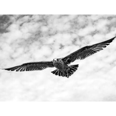 Wings -- Stephen Zapantis