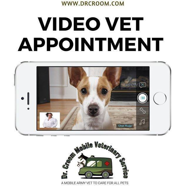 Video Veterinary Appointment for Two Pets
