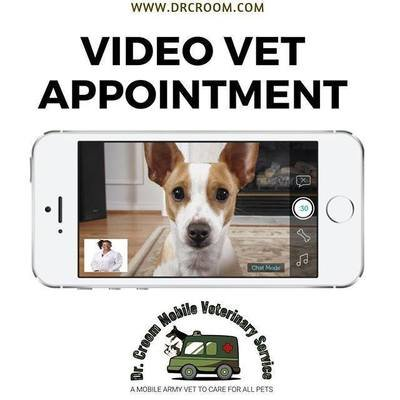 Video Veterinary Appointment, 1 Pet--20 minutes