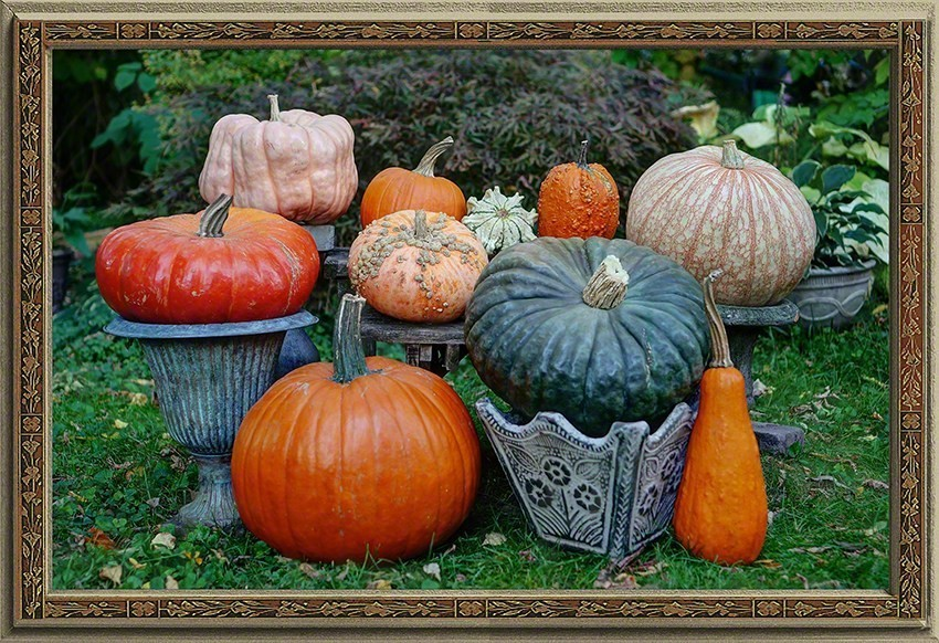 Portrait of the Pumpkins